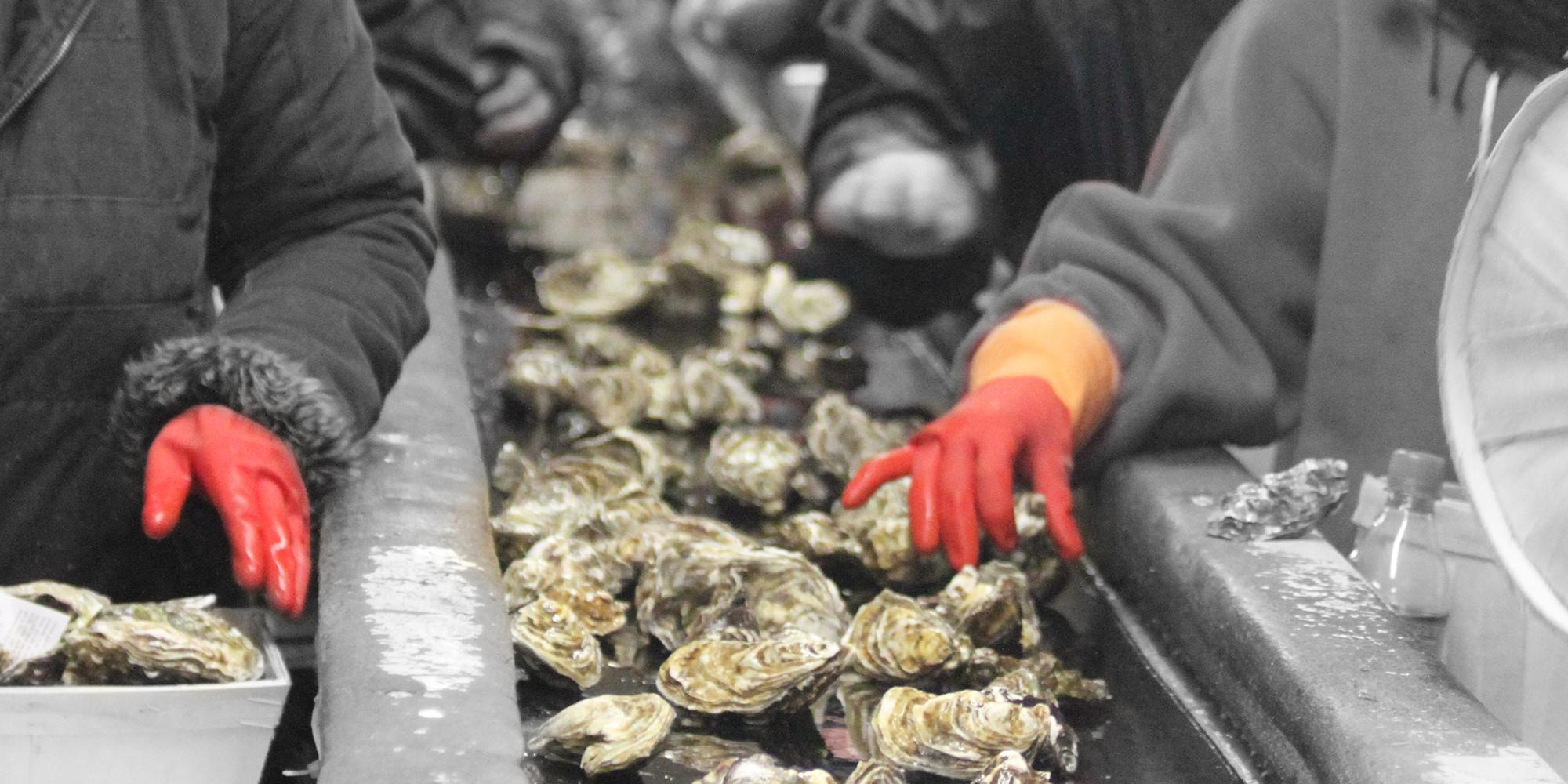 Discover oyster farming <br/> in Cancale